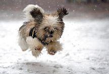 doggies / by Cindy Reeves Brown
