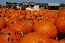 Fall Travel / Fun Travel during the Fall - Halloween, Pumpkin patches, fall color and more! Pins go to actual links.  @rwethereyetmom to be added #Fall #Travel / by Rebecca Darling