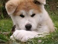I Need A Puppy / by Alyssa Wilson