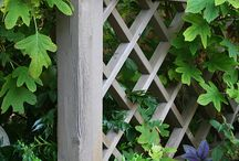 Side yard / by Whit Marti