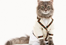Dapper Cats / by Gamerwife