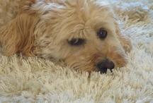 Doggy Do / by SueBDo .com