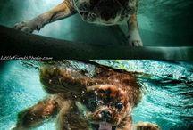 Dogs! / by Jackie Davies