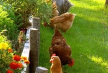 My obsession with chickens. / by Brenda Refsland