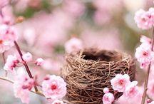 spring / by Meg Colquhoun