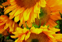 Flowers / by Kathleen Kennedy Gerardi