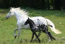 Horses, Magnificent!! / by Bonnie Amos
