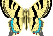 Caterpillar to butterfly Unit / by Nikki Rosenzweig Hinkle