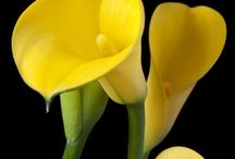 yellow, yellow, yellow / Color / by Bobbie Stewart