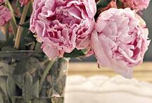 Flowers, Flowers Never enough flowers!!! / by Sandra Jensen
