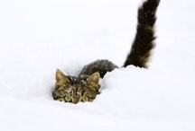 snow cats / by modcatlove