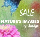 Promotions - NIBD / by Nature's Images By Design