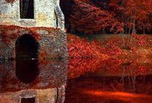 Trees in Autumn / by Liesl Garner
