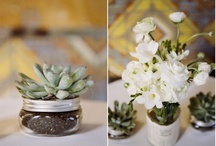 Succulent love / by Alison, The Knotty Bride