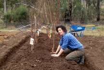 Home Orchard / by Rabbit Ridge Farm (Jordan Charbonneau)