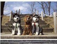 Doggies!! / by Vickie McKnight