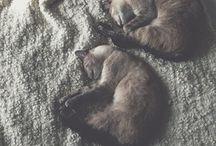 Wolf & Rosy. / Follow on Instagram @wolfandrosy / by Coco Tardiff