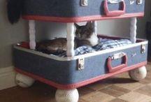 Cat ideas for home / by Marina Escamilla