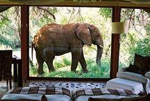 South Africa / by Henno Kruger