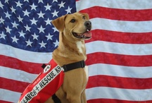 Patriotic Pets / Meet some of the furry nation's most patriotic pets!  / by Petplan Pet Insurance
