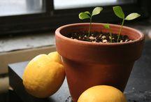 Plants / by Cristina A