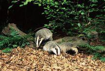 Animals / Northern Ireland's wildlife / by Northern Ireland Environment Agency