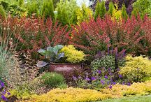 Landscaping Pinspiration / Whether it's your backyard, front yard, or something in between you want your lawn to look simply the best. / by Simplicity