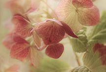 Difusas en flor / by Angeles Roy