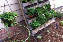 Gardening / by Teresa Sterling