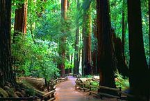 places I want to go / by WALK SIMPLY Outdoors, Hiking, Walking, Play