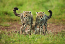 Animal Babies / by Lion World Travel