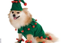 christmas  / The big day is round the corner and its time to get dressed in costumes and decorate the house and trees.Find all kinds of accessories like head bands,rings, caps, hats and many more. / by PartyBell.com-Online Costumes and Party Supplies Store