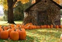 Fall / by Tamara King