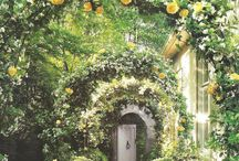 Garden & Flowers / by Stacy Stone