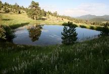 Colorado dreaming... / by Debbie Williams