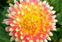 Floral / by Lauren Block