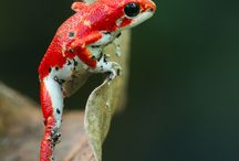 Fancy Frogs & Such   / by Tammy Minder