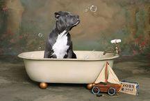 Favorite Dog Pics & Accessories / by Brooke Toler Belote