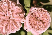flowers / by Yamawaki Lisa