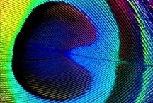 Kiss the Rainbow / by Meagan Pearce