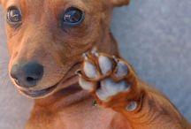 Pets / by Karen Gerhard
