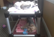Kuranda Bunk Dogs / Kuranda has a like of bunk beds for dogs and cats. Here are a few of them / by Kuranda Dog Beds