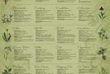 Herbs / by eSutras Organics