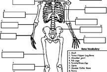 Biology and Anatomy / Resources for teaching animal and human biology, anatomy and physiology topics. / by Homestead Mom