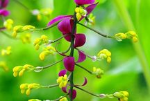 Ginger Flowers / Love these! Thanks for sharing! / by Maly Low