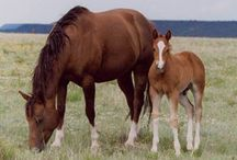 Horses / by Ann