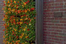 Vertical Gardens / Clever and beautiful vertical gardens / by Karen Burns