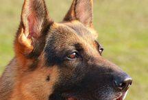 The wild side.. / I'm a dog person, really!  / by Jessica Elmenhorst