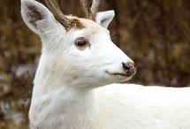 Deer to me / by Brayton Interiors