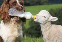 Sheep / by Faron Franklin